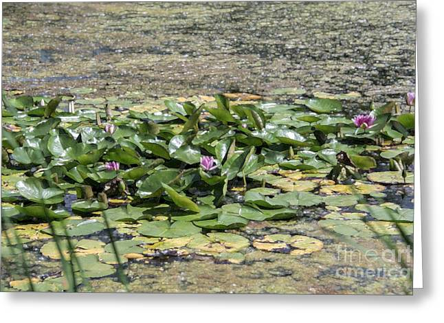 Water Lilies At Giverny - 5 Greeting Card