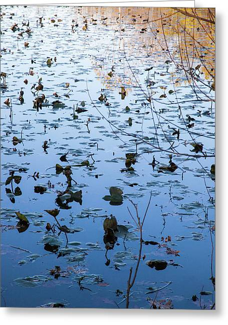 Water Lilies Autumn Song Greeting Card