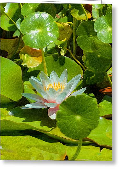 Water Lilies In Texture - One Greeting Card