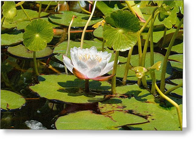 Water Lilies In Textures - Three Greeting Card