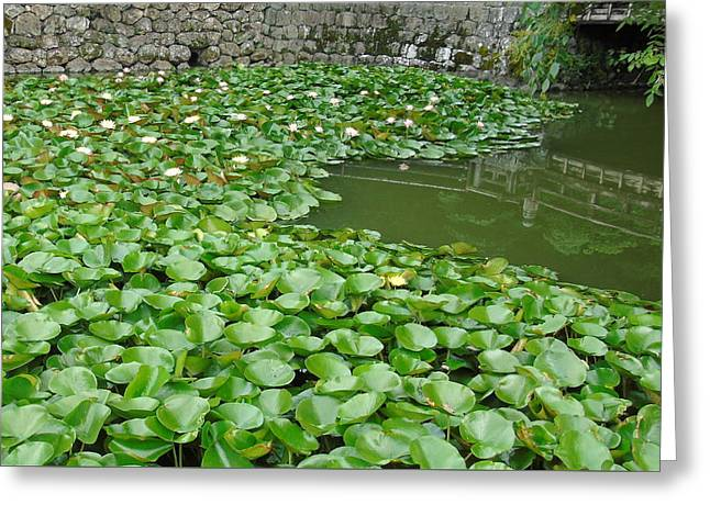Water Lilies In The Moat Greeting Card