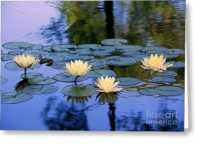 Water Lilies Greeting Card by Lisa L Silva