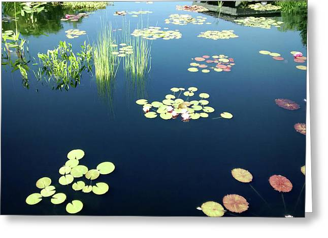 Greeting Card featuring the photograph Water Lilies by Marilyn Hunt