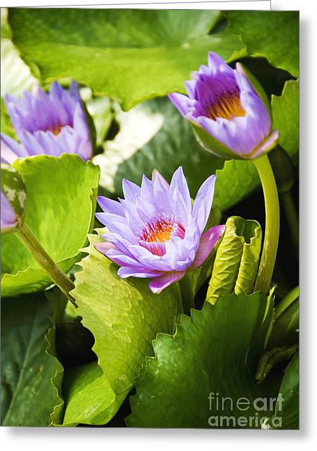 Water Lilies Greeting Card by Ray Laskowitz - Printscapes