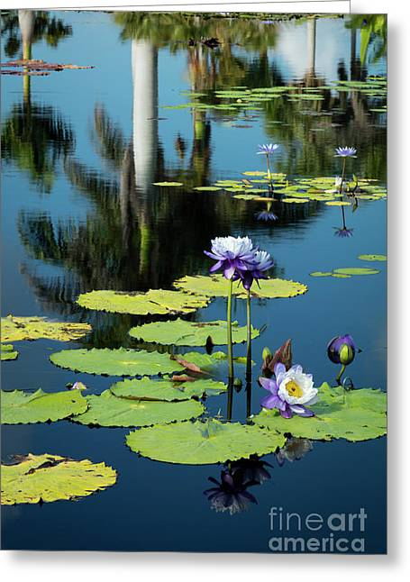 Water Lilies Vi Greeting Card