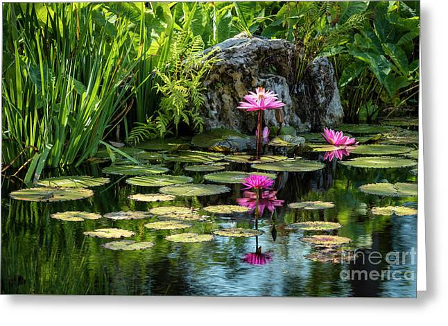 Water Lilies Vii Greeting Card