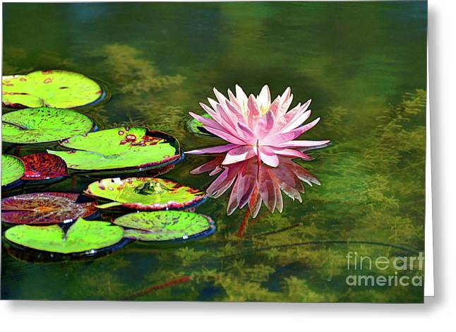 Water Lily And Frog Greeting Card by Savannah Gibbs