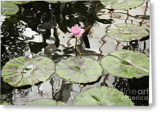 Water Lily Canvas Greeting Card by Carol Groenen
