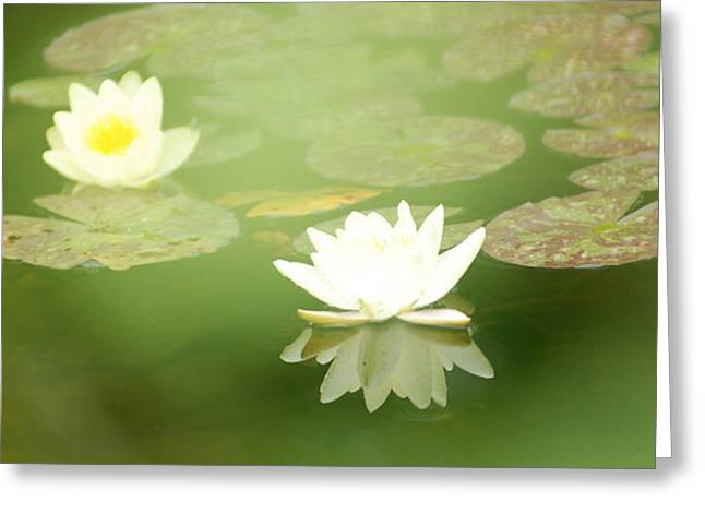 Greeting Card featuring the photograph Water Lily by Douglas Pike
