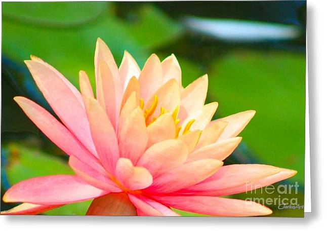 Water Lily In Pond Greeting Card