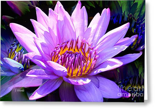 Water Lily In Purple Greeting Card