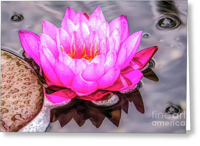 Water Lily In The Rain Greeting Card