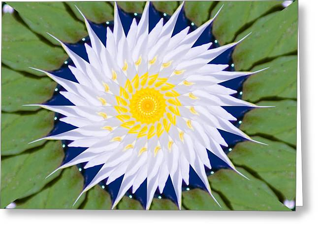 Greeting Card featuring the photograph Water Lily Kaleidoscope by Bill Barber