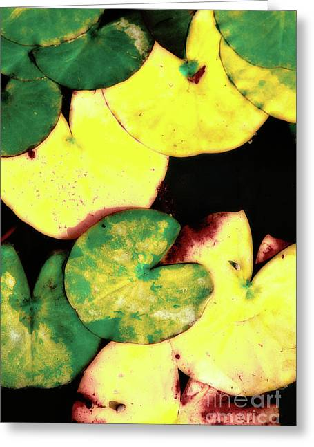 Nenuphar Greeting Cards - Water lily leaves Greeting Card by Gaspar Avila