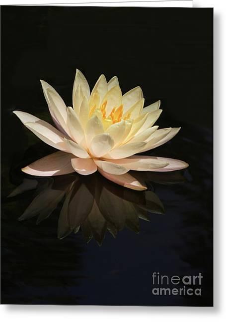 Water Lily Reflected Greeting Card by Sabrina L Ryan