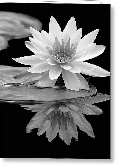 Water Lily Reflections I Greeting Card