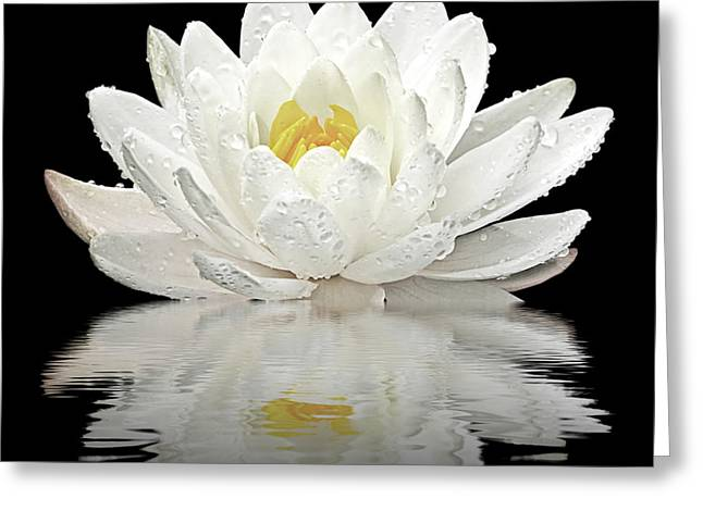 Water Lily Reflections On Black Greeting Card by Gill Billington