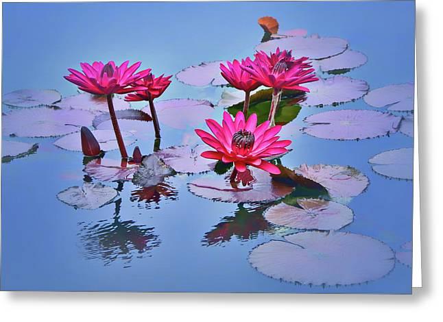 Water Lily Study Greeting Card by Nikolyn McDonald