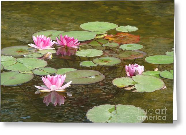 Water Lily Greeting Card by Tierong Fu