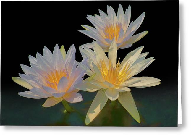 Water Lily Trio Greeting Card by Nikolyn McDonald
