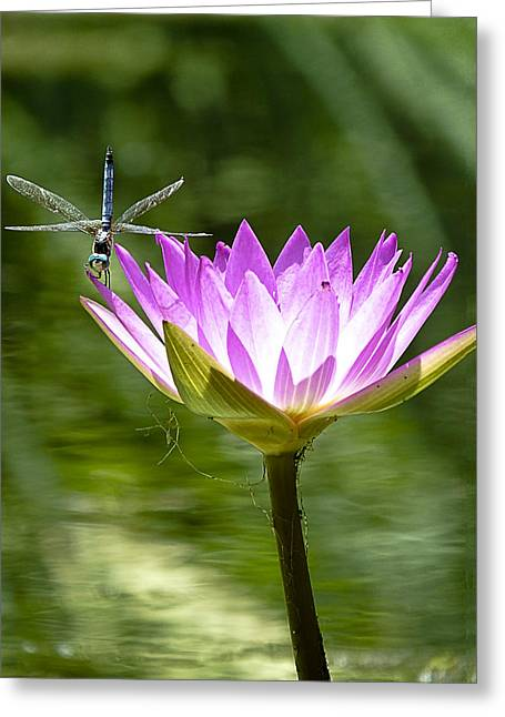 Greeting Card featuring the photograph Water Lily With Dragon Fly by Bill Barber