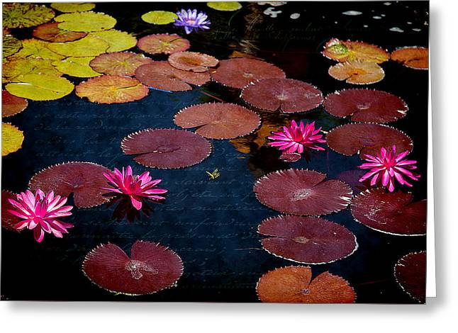 Water Lily World Greeting Card by Milena Ilieva
