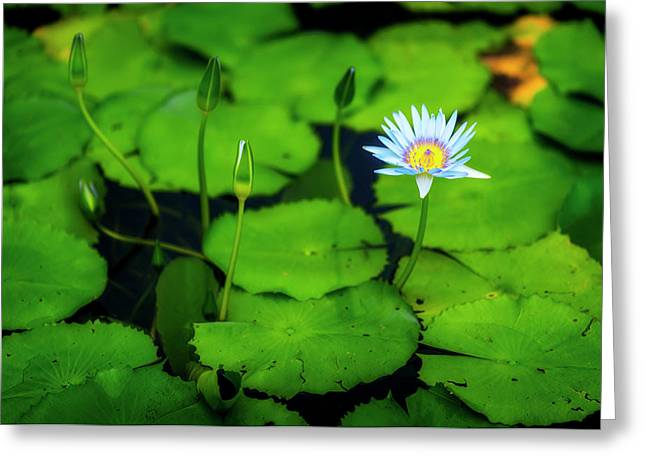 Water Logged Greeting Card by Ryan Manuel