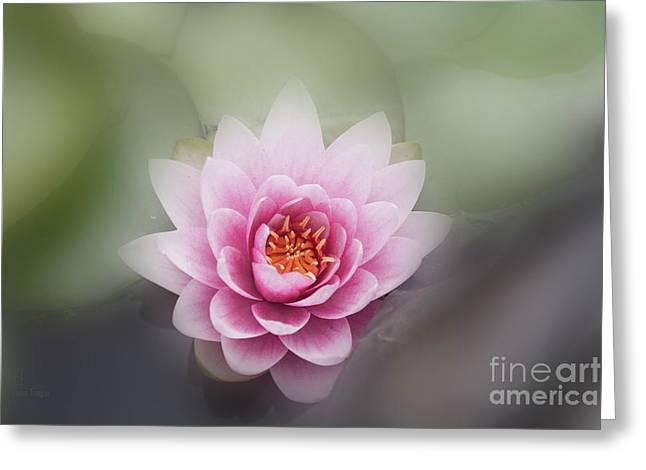 Water Lotus Flower Greeting Card