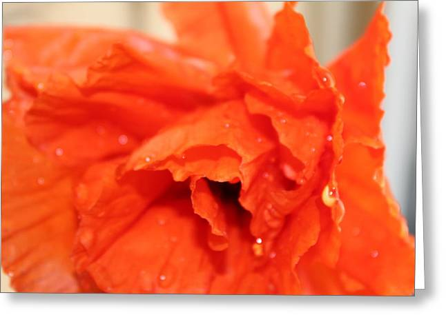 Water On Orange Greeting Card by Christin Brodie