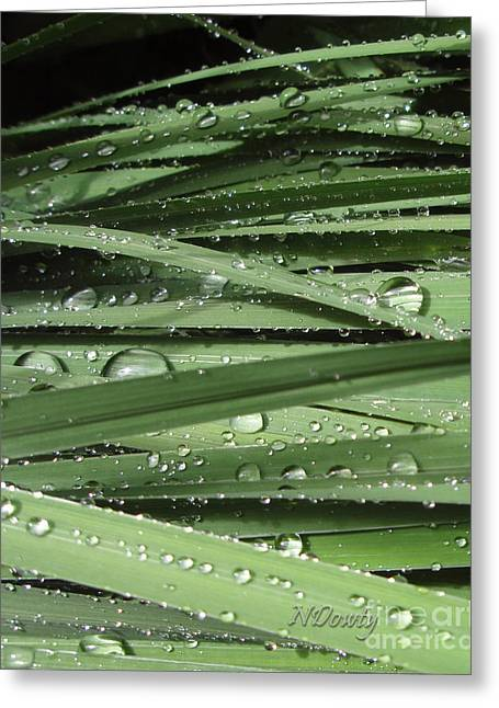 Water On Siberian Iris Greeting Card