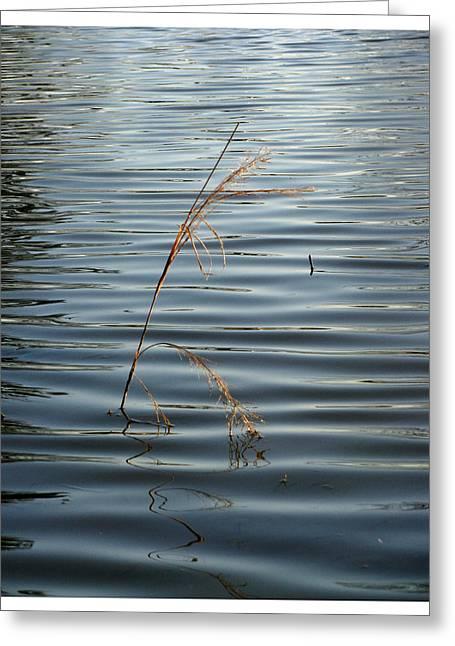 Water Reed Greeting Card by Dawn Davis