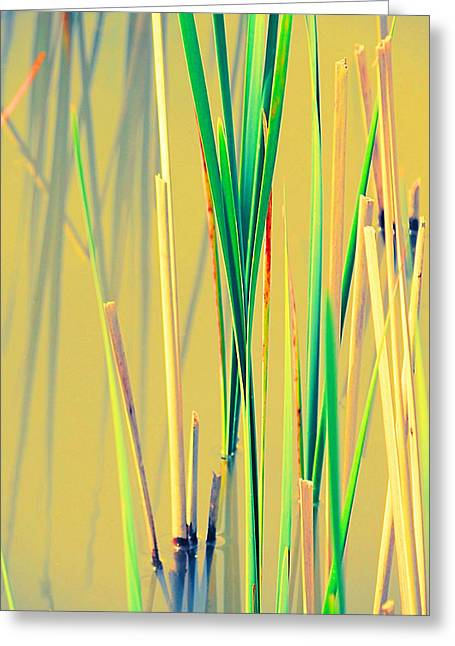 Water Reeds Soft Greeting Card