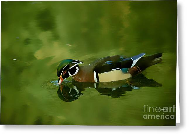 Male Wood Duck Water Reflections Greeting Card