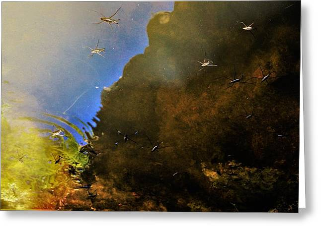 Water Spiders Greeting Card by SeVen Sumet