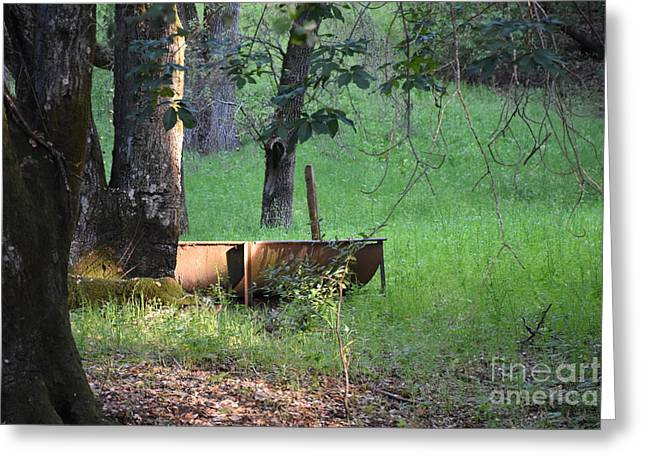 Water Trough Greeting Card by Suzanne Leonard