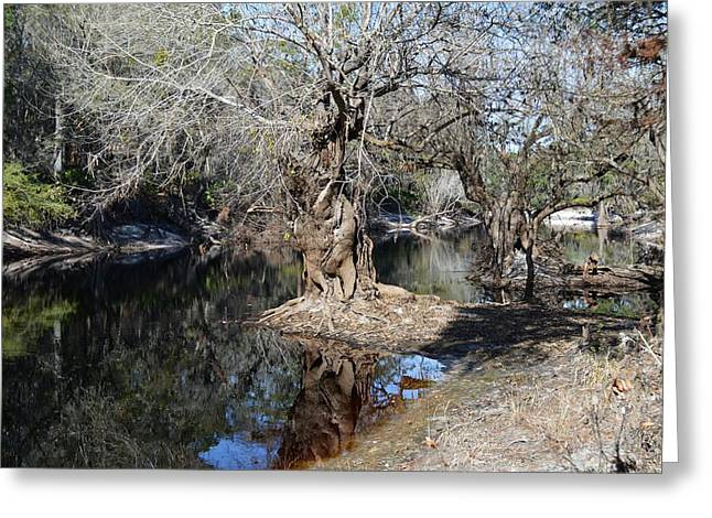 Water Tupelo - Suwanee River Greeting Card