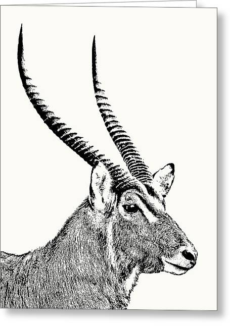 Waterbuck Male Portrait Greeting Card