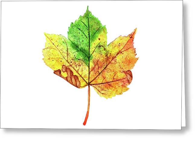 Watercolor Autumn Maple Leaf Greeting Card