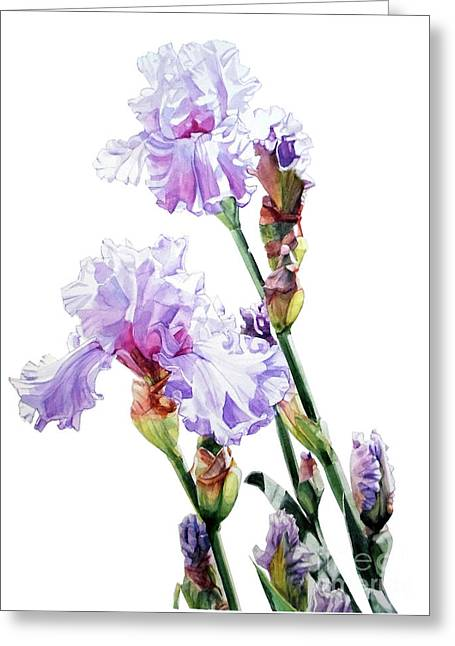 Watercolor Of A Tall Bearded Iris I Call Lilac Iris Wendi Greeting Card