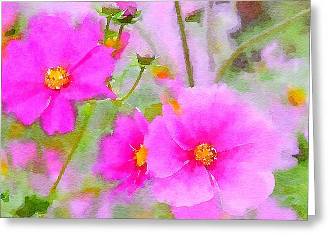 Greeting Card featuring the painting Watercolor Pink Cosmos by Bonnie Bruno