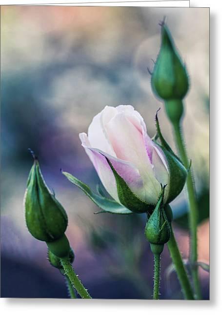Watercolor Rose Greeting Card