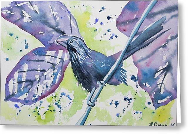 Watercolor - Smooth-billed Ani Greeting Card