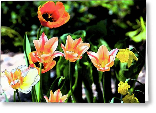 Watercolor Tulips Greeting Card by Sheryl Thomas