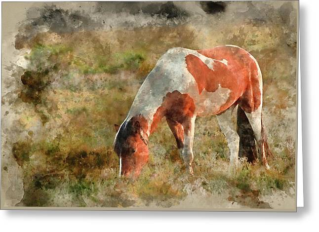 Watercolour Painting Of Close Up Of Brown And White New Forest P Greeting Card by Matthew Gibson