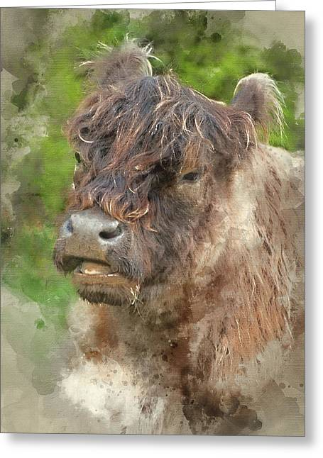 Watercolour Painting Of Highland Cattle Cow Breed  Greeting Card