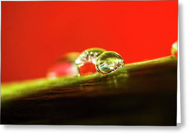 Waterdrops_1 Greeting Card by Jacqueline Schreiber