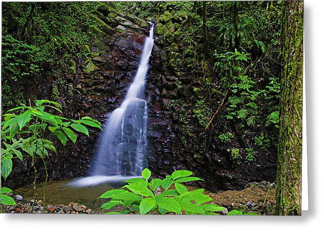 Waterfall-1-st Lucia Greeting Card by Chester Williams