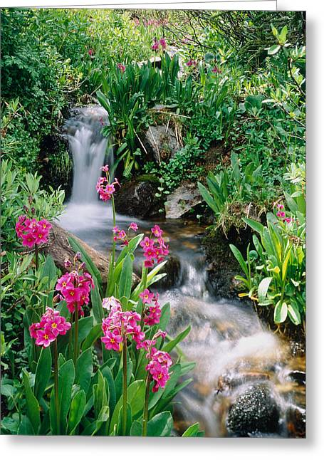 Waterfall Co Usa Greeting Card