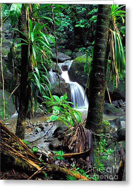 Waterfall El Yunque National Forest Mirror Image Greeting Card
