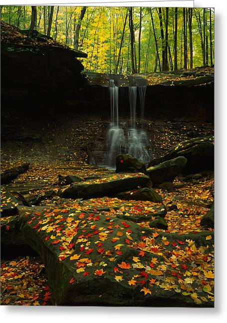 Waterfall In A Forest, Blue Hen Falls Greeting Card by Panoramic Images
